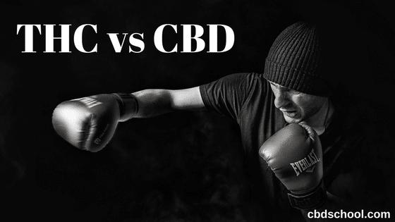 THC-vs-CBD.png