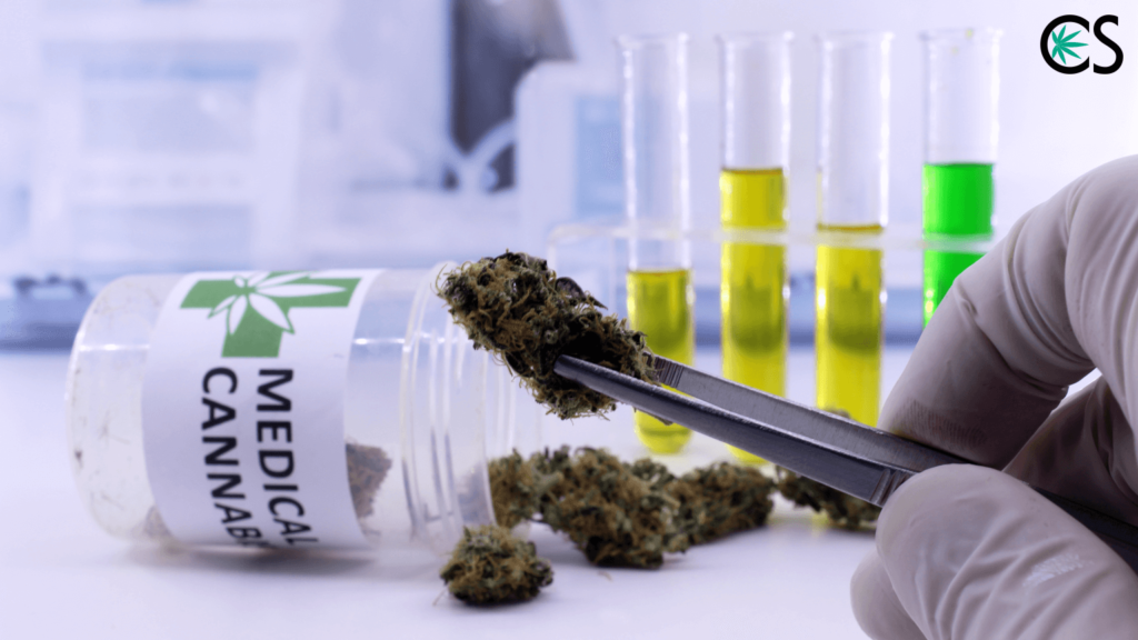 Will CBD Oil Make Me Fail a Drug Test? - CBD School