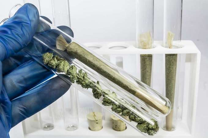 Cannabis In Test Tubes