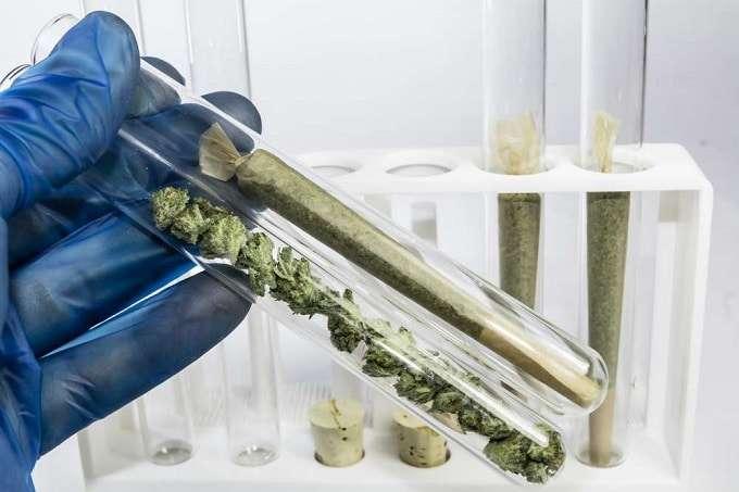 Cannabis In Test Tubes