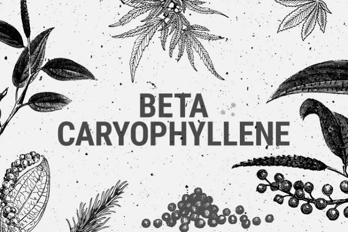 Illustration Of Beta Caryophyllene