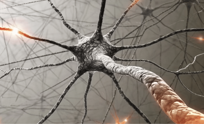Illustration Of Nervous System