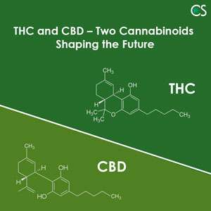 THC and CBD – Two Cannabinoids Shaping the Future