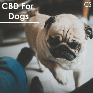 CBD for Dogs: Teenie's Story