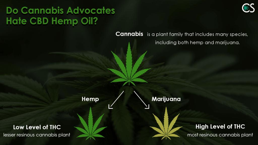 Do Cannabis Advocates Hate CBD Hemp Oil? | CBD School