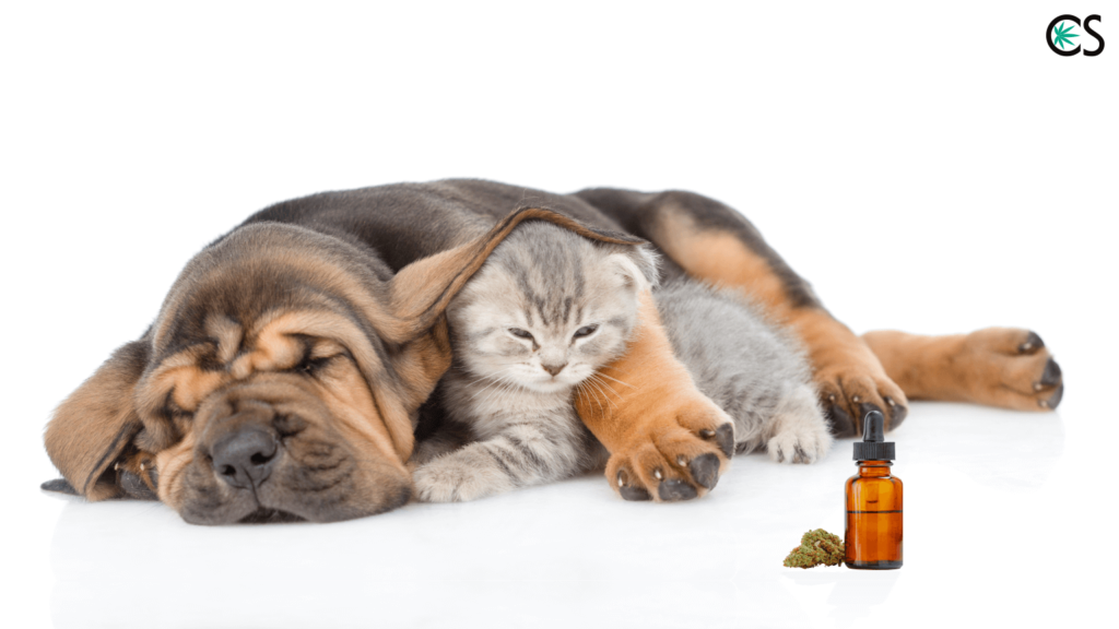 Introduction to Using CBD Hemp Oil for Pets (And Dosing Info) - CBD