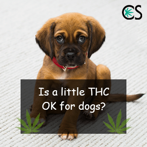 Is it ok to use little amount of THC for Dogs?