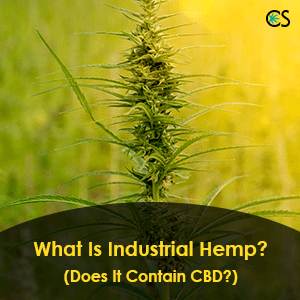 What Is Industrial Hemp? (Does It Contain CBD?)