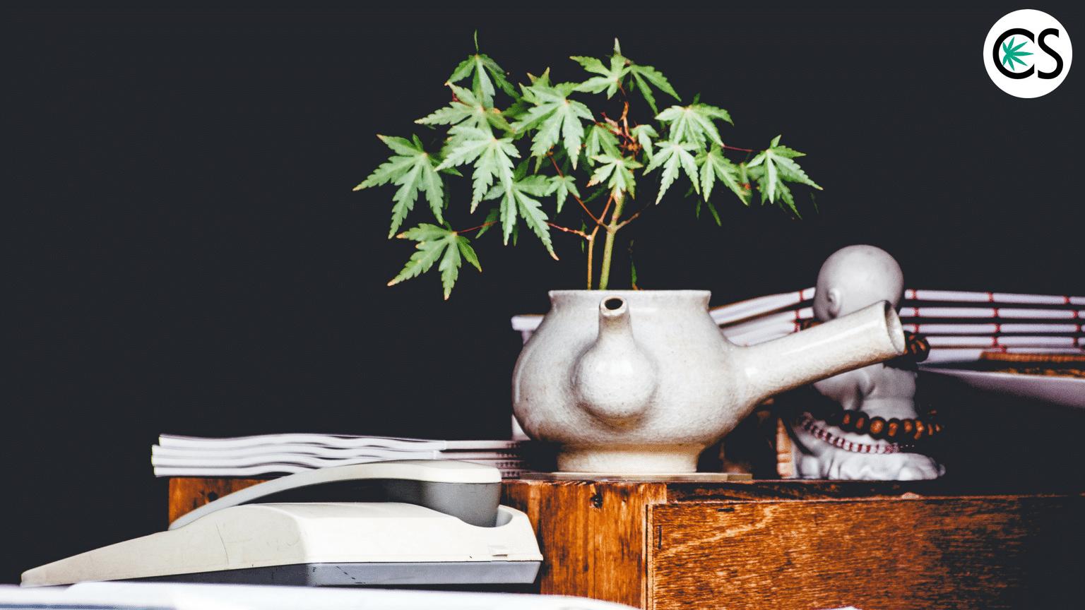 cannabis-plant-growing-desk