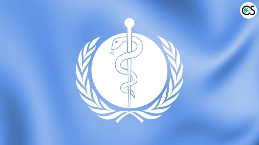 world-health-organization-cbd-oil
