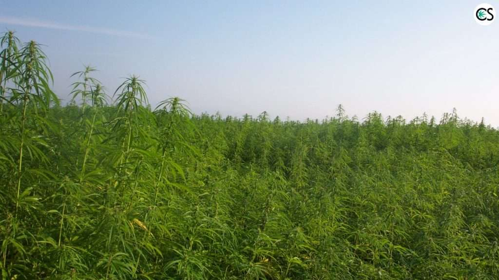 2018-farm-bill-hemp-legalize