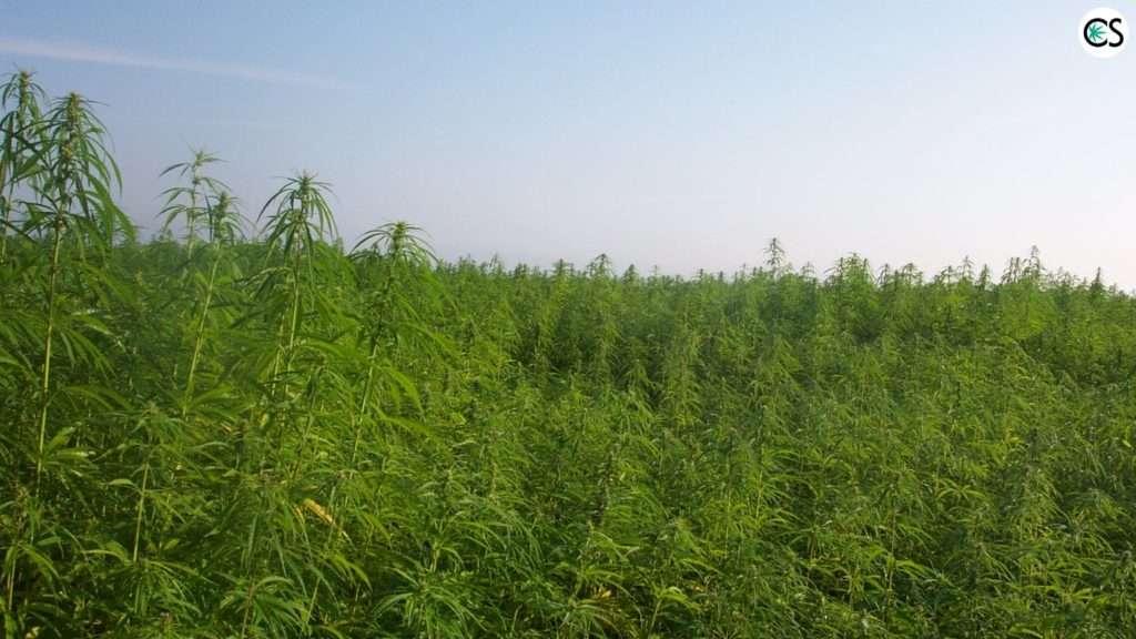 2018-farm-bill-hemp-legalize