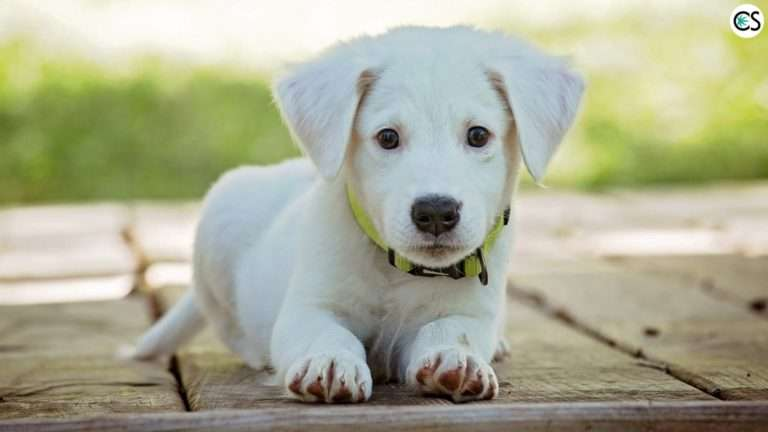 cbd-for-dogs-what-you-need-to-know