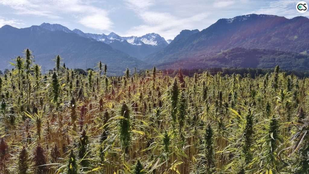 hemp-farm-bill-2018