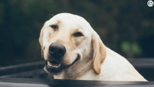 cbd-dog-thunderstorm-anxiety