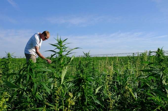 Kentucky farmers growing cannabis