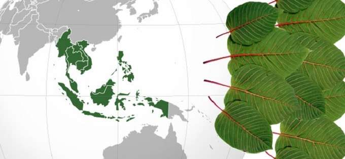 south east asian kratom