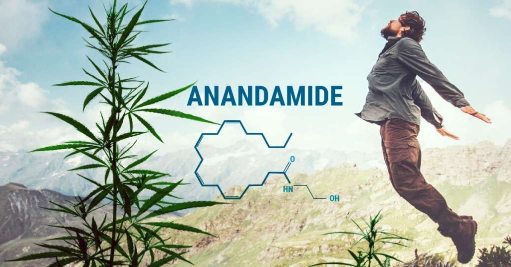 anandamides