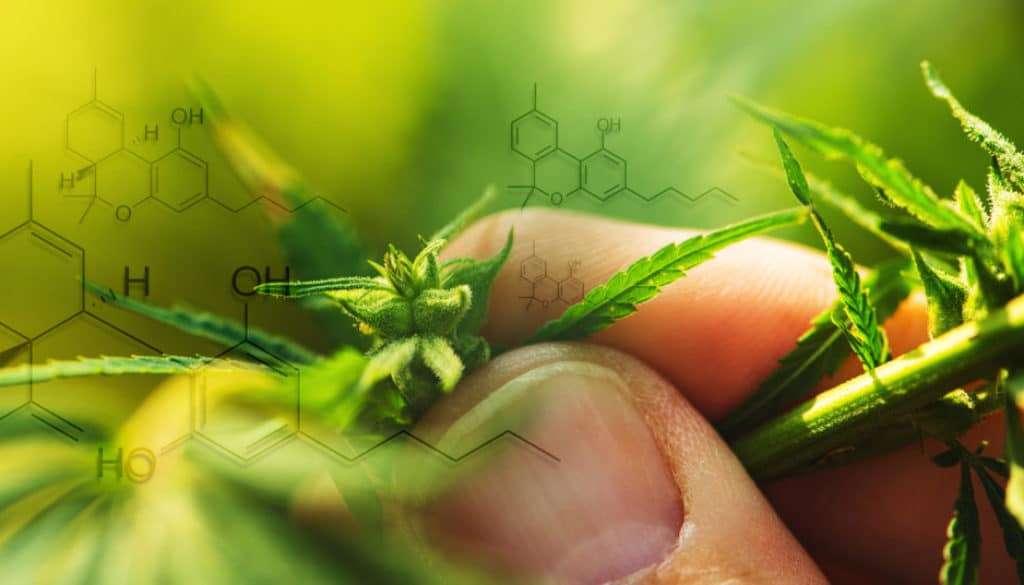 endocannabinoids picture