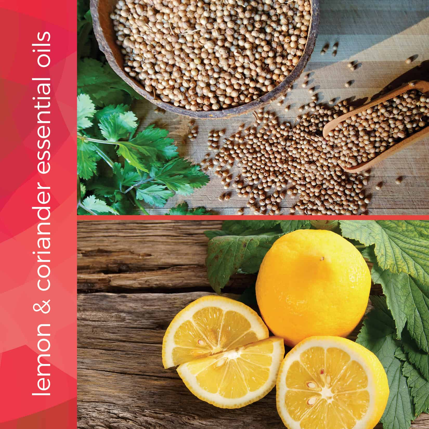 lemon and coriander