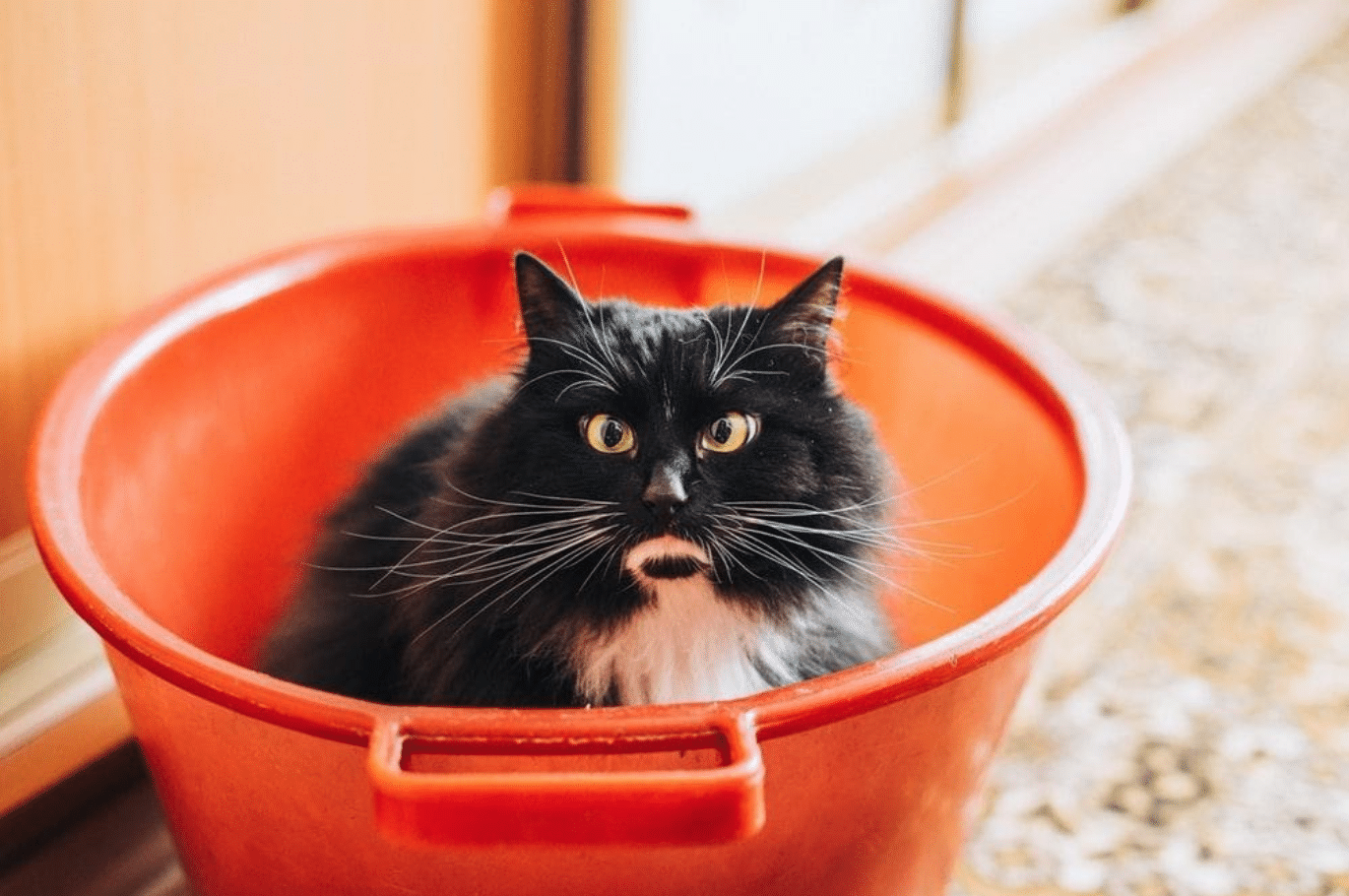"Black cat in a bucket ""width ="" 1370 ""height ="" 910 ""/> </p> <h2> Cannabidiol Almighty: only for humans? </h2> <p> <span style="