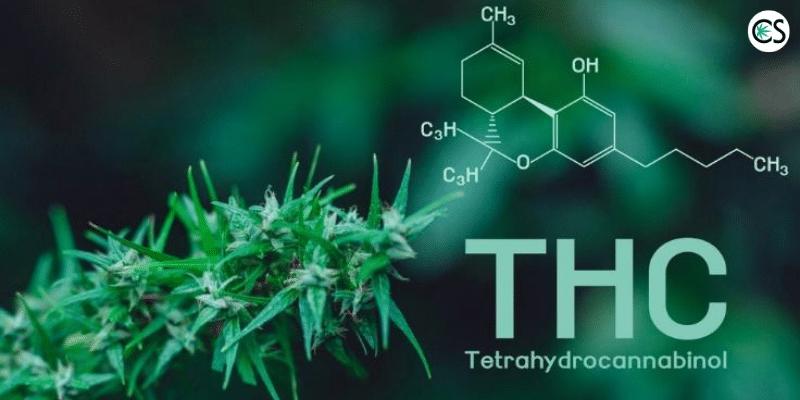 cannabis explanation