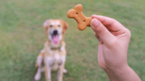 best cbd dog treats